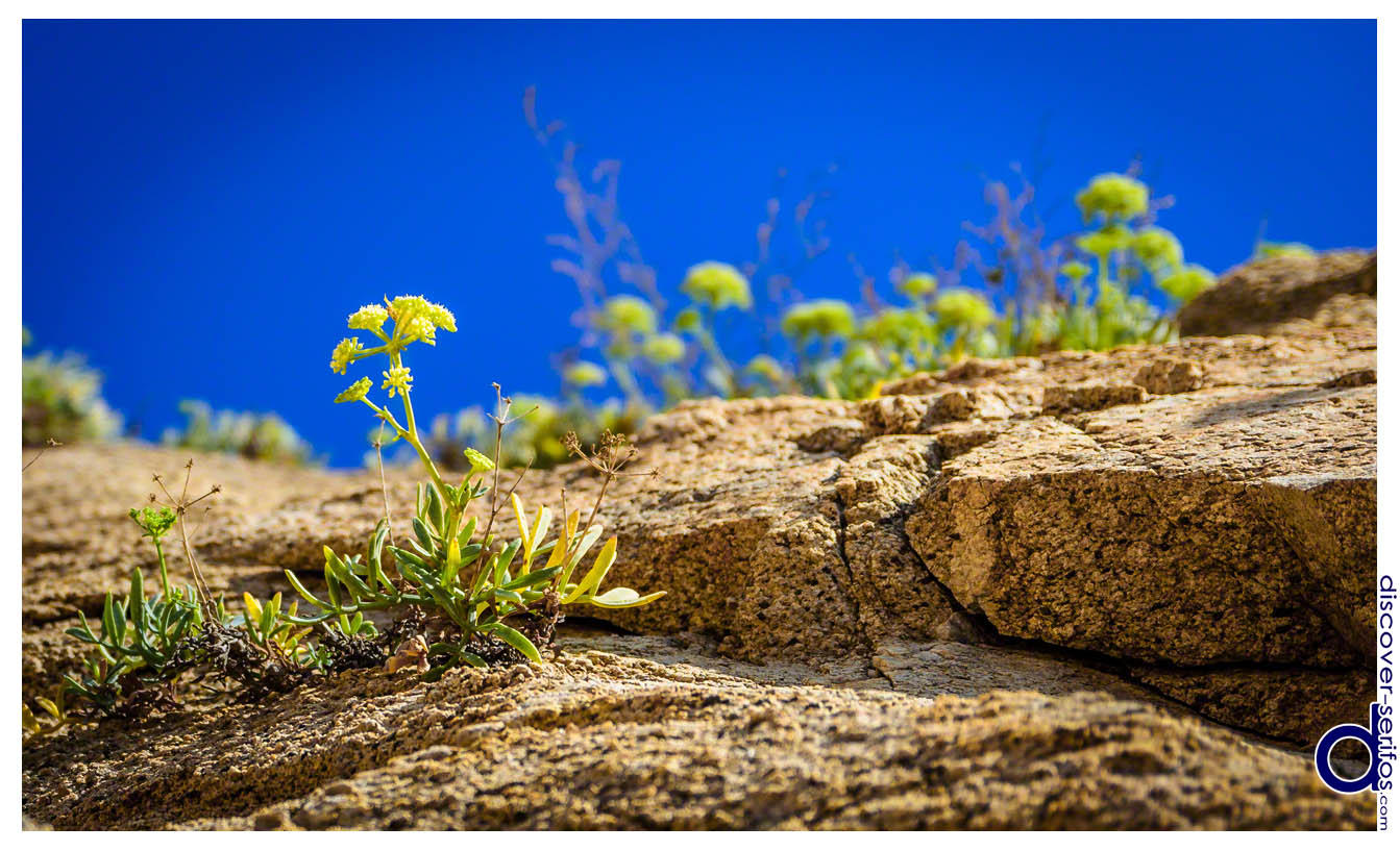 Flowers and rocks in Kalo Ampeli