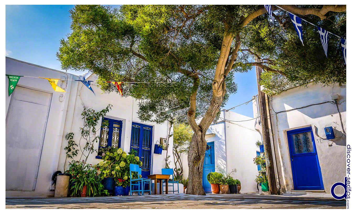 Ελιά στην Πλατεία του Οικισμού της Παναγιάς - Σέριφος